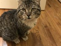 Graham is a 3 yr old, very friendly tabby fellow who