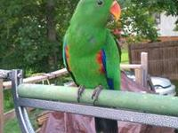 I have a 7 month old Grand Eclectus with a nice sized