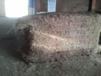 Grass Cow hay for sale CRP grass 4X4X8 approx 1300lb