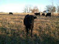 I raise 100% Grassfed Black Angus beef on my 160 acre