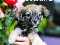 Grasshopper's story Adoption fee is $225.