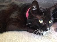 Grasshopper is a black and white female Domestic Medium