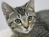 Gravy's story Hello! Are you looking for a social kitty