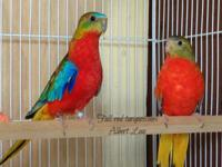 Young breeding pair, both are gray green, male is 2014