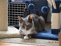 Graylee's story Im Graylee, a very mellow, laid-back 4