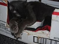 Grayson's story Grayson is a special needs kitty. He