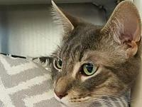 Grayson's story All of our adoptable pets are spayed or