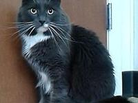 Grayson @ Tigard Petsmart's story I am available for