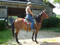 Sonata is a well trained bay Arabian mare who is a real