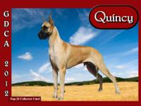 Great Dane, beautiful AKC puppies. Born April 27, 2013,