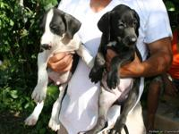 These Puppies are available 7/16/2013 They are a