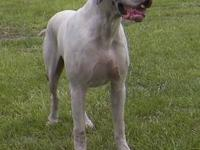 Remmington Danes currently has several amazing great