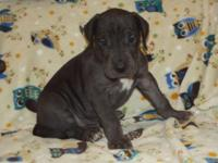 We have 3 puppies available they are female one is a