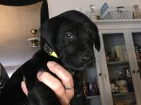 Black female with white markings. Family raised and