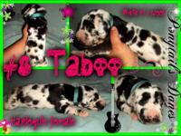 This is Taboo the monster in this litter, She is a
