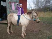peanut is a 12 year old gelding. he has a little spunk