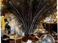 Great Peacock Feathers forsale by Each. Several to