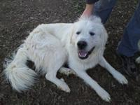 I am looking to rehome our Great Pyrenees. He is an