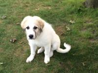 I have one male 12 week old puppy left. He comes from