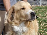 Great Pyrenees - Largo And Winston - Large - Adult -