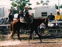 Big red is a 1998 chestnut gelding standing 16.1 hands.