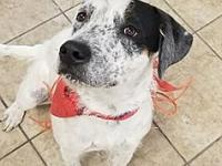 Greeley's story Greeley is a sweet sweet boy looking
