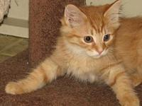 Greeley (DMH baby boy)'s story This is Greeley a DMH