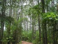 Description This 99.6 acre property is located in