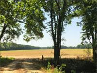 Great farming tract for sale in Williamsburg County!