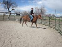 Red is a large 11 year old Green broke POA pony mare.