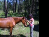 Red is a large 9 year old Green broke POA pony mare.