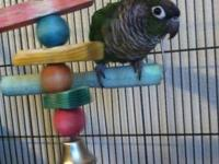 I have a gorgeous Green Cheek Conure for sale! I desire