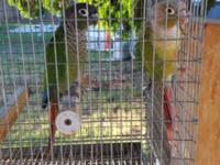 I have (2) Conures that I am selling to the first