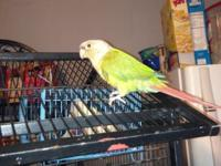 I have a pair of enjoying conures for sale. Since i
