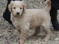 We are Sweet Southern Doodles - situated in Hernando,