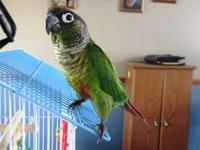 I bought this Conure back in December. He's a good