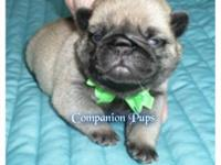 ~This puppy is Green Collar~ VIDEO LINK~