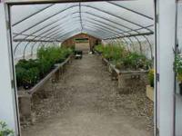 A used 96'x20'x11' greenhouse with roll up sides and