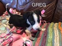 Greg's story You can fill out an adoption application