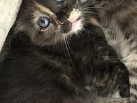 My story Grenadine is a sweet and shy little girl, who
