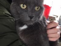 Greta is a beautiful 5 year old grey kitty with just a