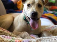 This 7 month old Retriever mix is just as sweet as she