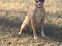 Gretchen's story Beautiful Gretchen needs a home! She
