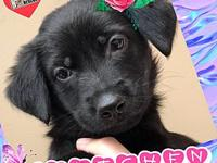 Gretchen's story Gretchen is a young female puppy who