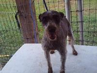 Gretchen's story Gretchen is a very sweet dog. She has