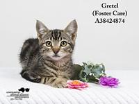 Gretel (Foster Care)'s story All cats in the adoption