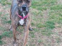 Intake date:  Adoption Fee: $150.00 Type: Canine Breed: