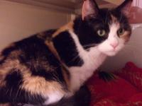 Gretta is a 2 year old female cat looking for her