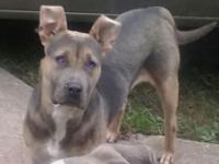 I have a 9 month old gray and brown (tri marking) male