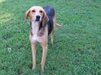 Greyhound - Mindy - Large - Adult - Female - Dog Race